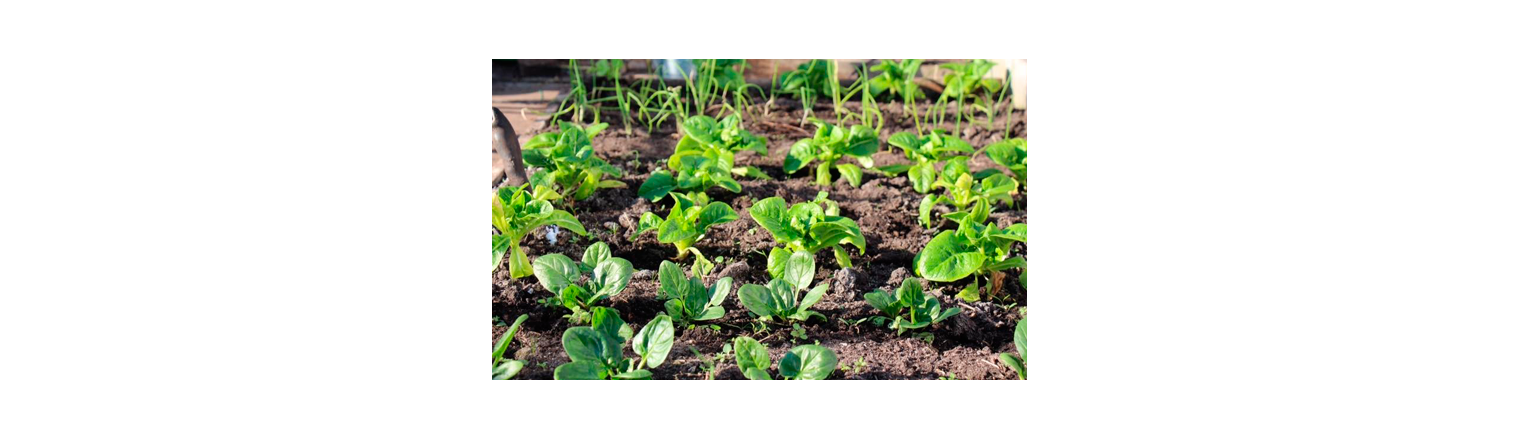 Sowing of the overwintering in September