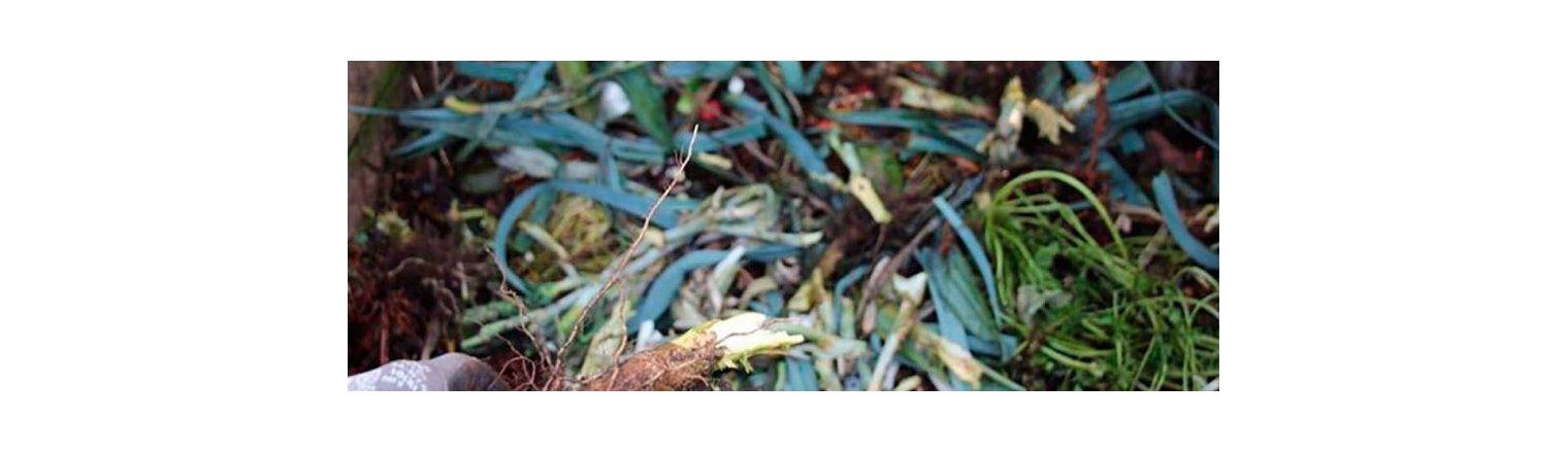 Composting of cabbage sticks