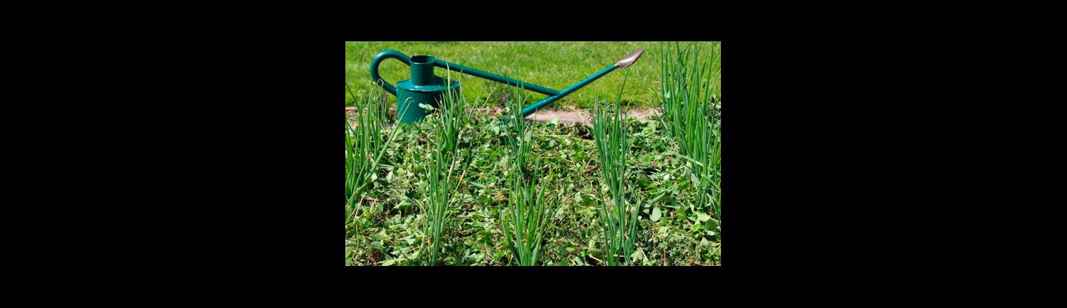 Ground cover prevents evaporation