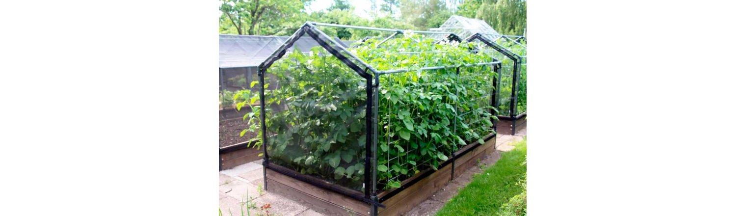 Large Potato Plants - WHY?