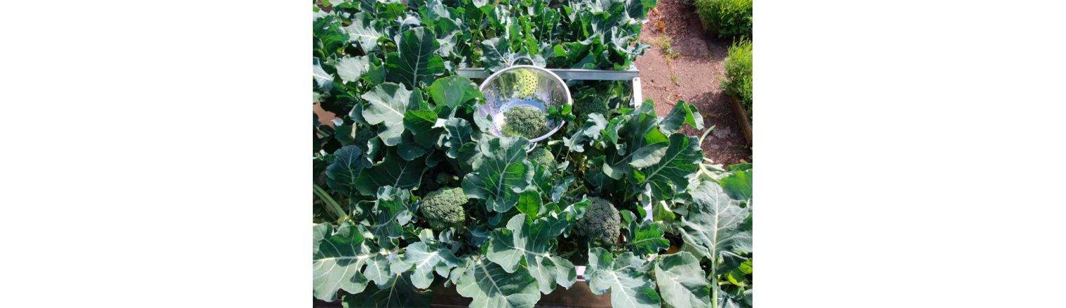 Circular economy at garden level