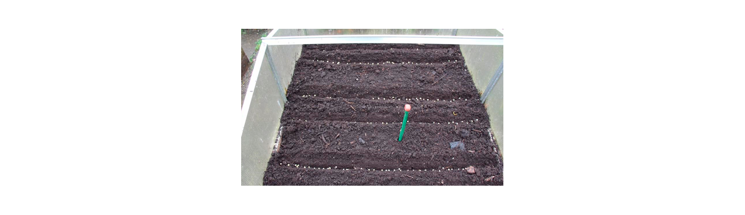 Peas can be sown in November
