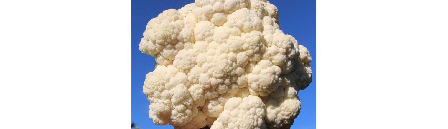 Boast cauliflower