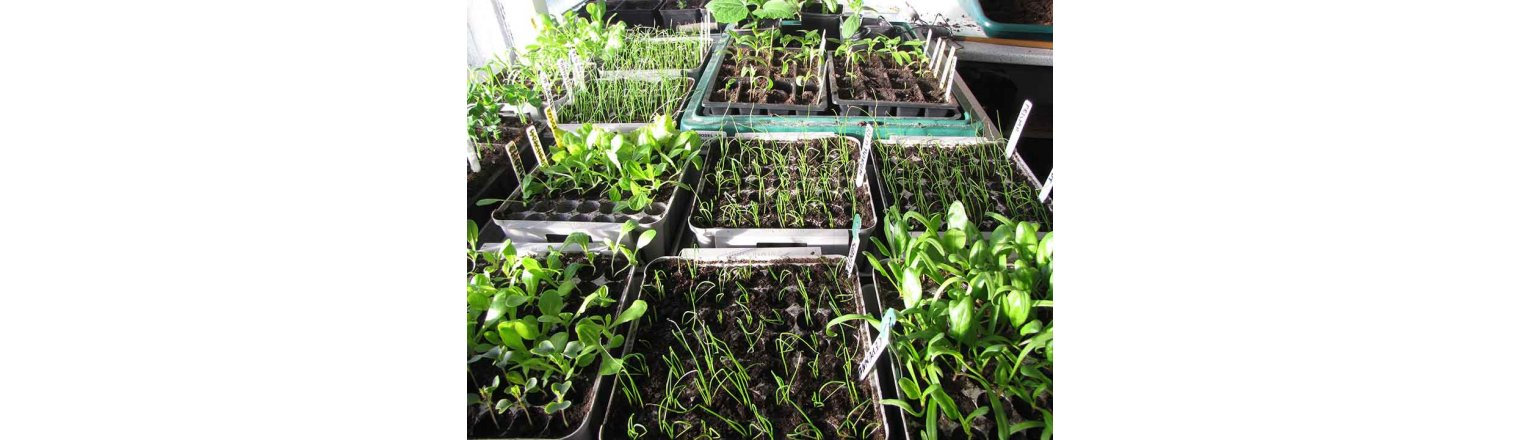 Great places to buy seeds