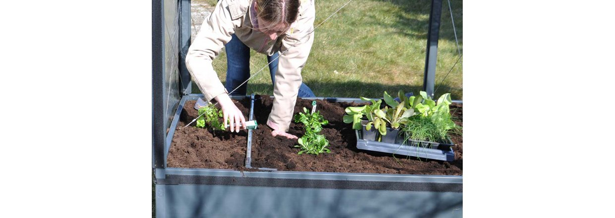 How to sow and plant
